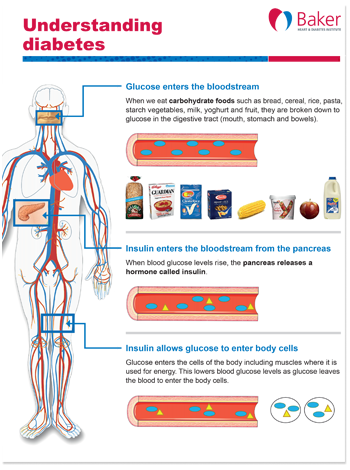 Baker-Institute-factsheet-understanding-diabetes