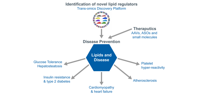 Diagram of Lipid Metabolism and Cardiometabolic Disease Research Program